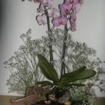 Bloemstuk 28 juli 2019. De twee orchideeën symboliseren Lea en Rachel, de beide zusters die Jacob tot zijn vrouwen verwierf.