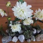 Bloemstuk 22 september 2019. Vredeszondag: Witte dahlia's boven stenen en uitgebloeide bloemen. Vrede wordt zichtbaar in verschillende vormen  van nieuw leven.